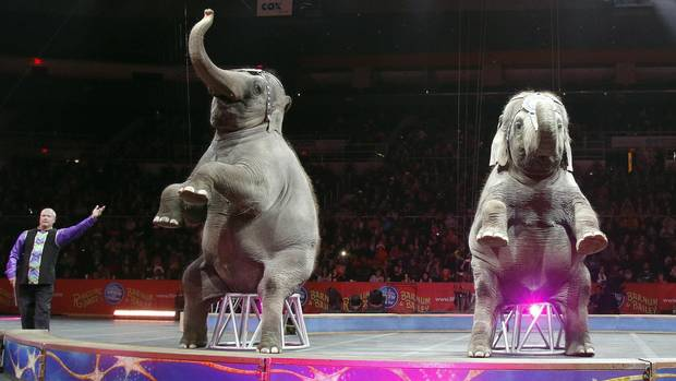 Asian elephants perform for the final time in the Ringling Bros. and Barnum & Bailey Circus on May 1 in Providence, R.I. (Bill Sikes/Associated Press)