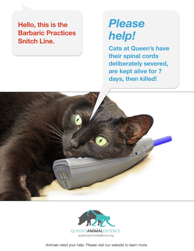 barbaric-practices-snitch-line-cats2