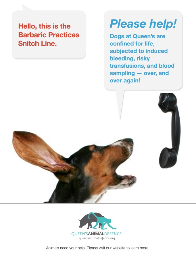 barbaric-practices-snitch-line-dogs2